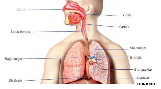 Ağızdan nefes almak bütün vucudu olumsuz etkiliyor