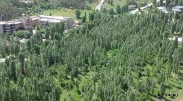 Ankara bozkırında ODTÜ ormanı