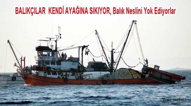 Ülkede Balıkçılık Can Çekişiyor